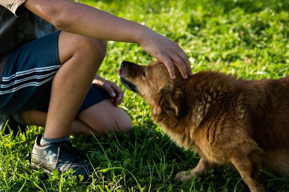 Streicheln eines Hundes. Hunde mögen es nicht, Kontakt aufzunehmen und über den Kopf zu streicheln.
