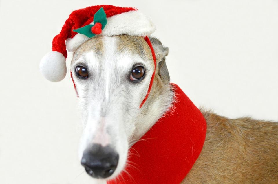 Ein Geschenk für einen Hund sollte ihn glücklich machen. Der Besitzer des Hundes weiß am besten, ob das Snacks, Kleidung, Spielzeug oder neuer Lager wird.