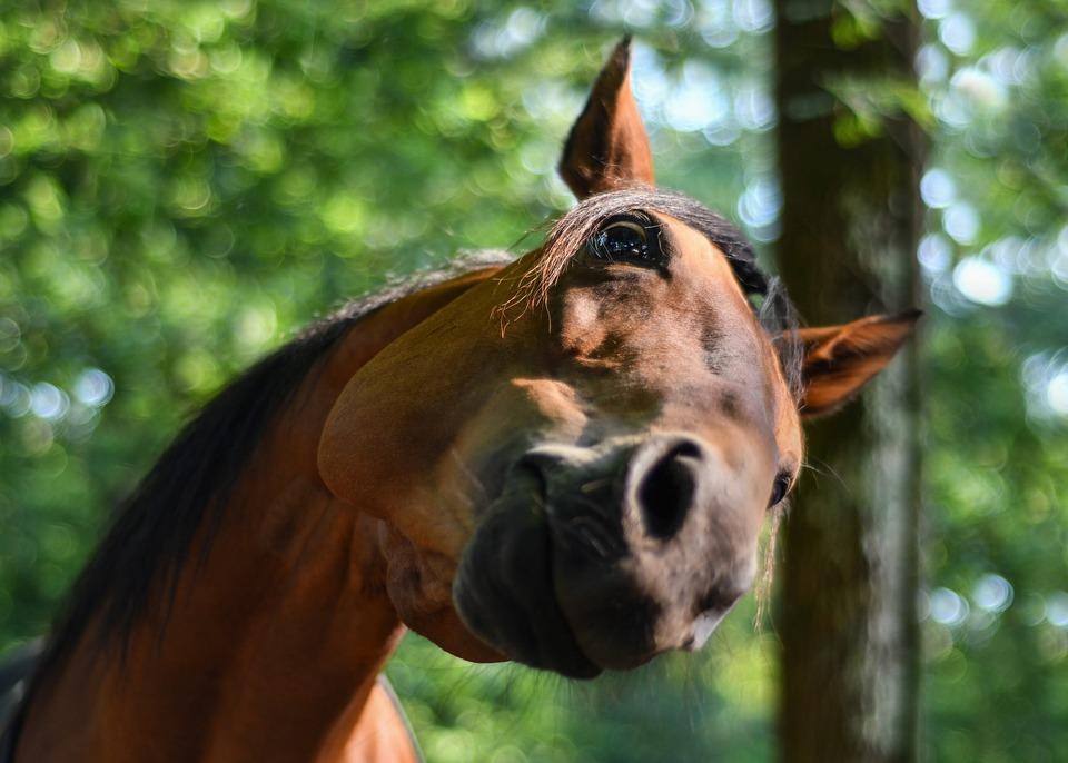 Was kann die Position des Pferdekopfes anzeigen?