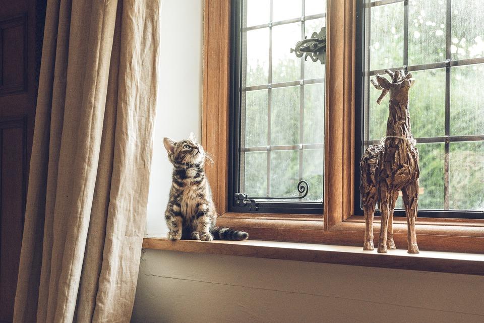 Katzen Bestrafen