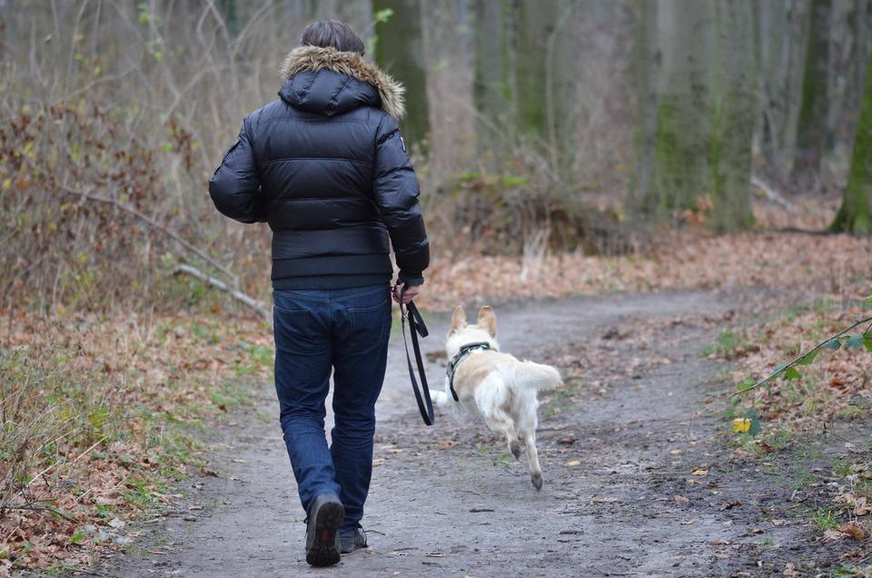 Zu Ihrer eigenen Sicherheit und zur Sicherheit eines Hundes sollten wir ihn immer an der Leine führen. Sie können Leinen mit großer Reichweite verwenden, damit der Hund frei laufen kann.