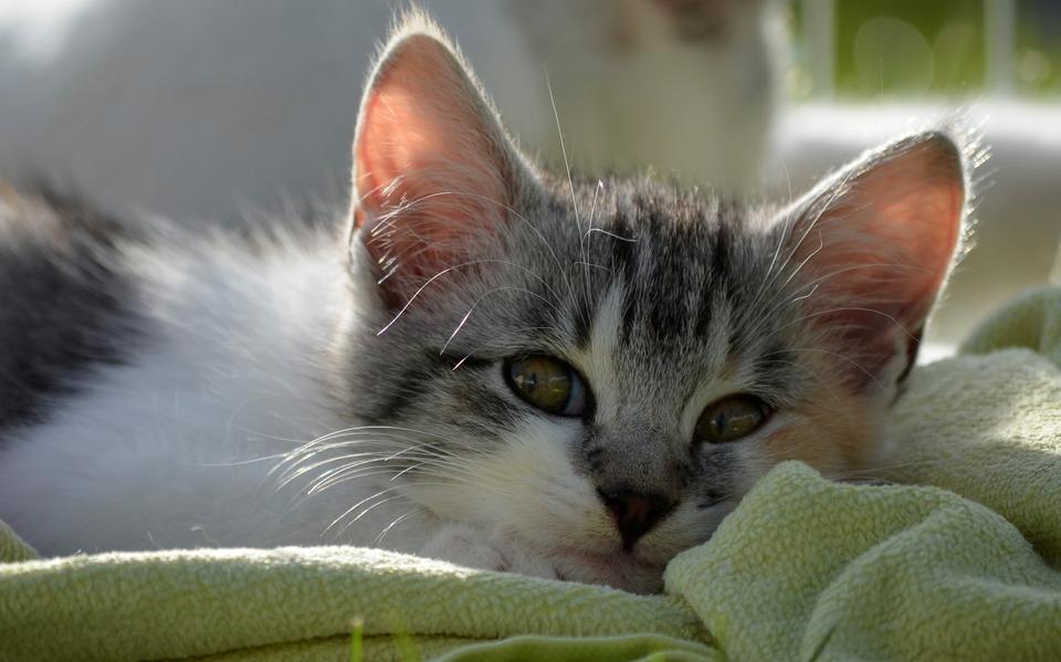 Warum erbricht die Katze? Was sind die Ursachen? Was kann..