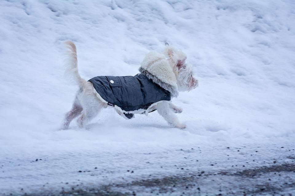Die Kleidung für Hund muss gut liegen und kann die Bewegungen des Hundes nicht einschränken.