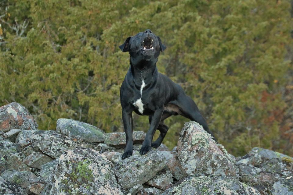 Der Hund bellt, wenn er sich einsam, verlassen und vernachlässigt fühlt.