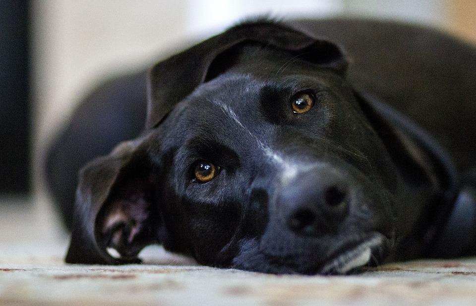 Wir haben wenig Zeit, um Erste Hilfe zu leisten. Wie kann man einem Hund oder einer Katze richtig Erste Hilfe leisten?
