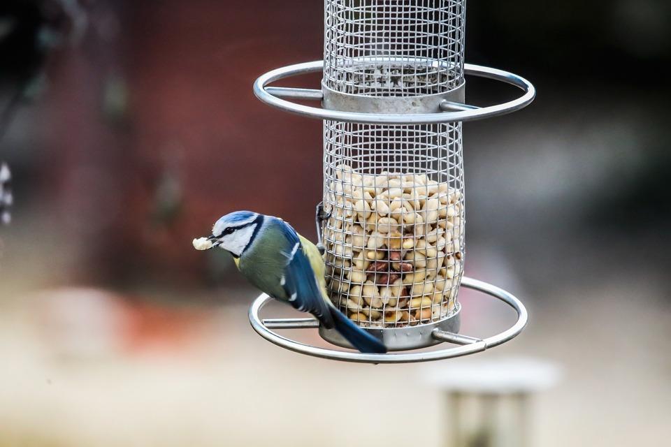 Vogelfutterhäuschen mit einem Behälter sind die hygienischste Lösung, da die Vögel das Futter nicht verunreinigen können.