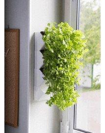 AQUAEL Versa Garden Herbs grüne Wand Pflanzen-Wandmodul