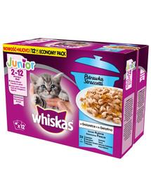 WHISKAS Nassfutter für Katzen in Gelee Junior Casserole Fischgeschmack (mit Lachs, Thunfisch, Seelachs, Weißfisch) 12x85 g