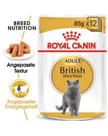 ROYAL CANIN British Shorthair Adult Katzenfutter nass für Britisch Kurzhaar 12x85 g