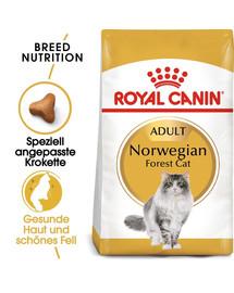 ROYAL CANIN Norwegian Forest Cat Adult Trockenfutter für Norwegische Waldkatzen 20 kg (2 x 10 kg)