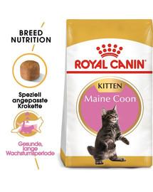 ROYAL CANIN Maine Coon Kittenfutter trocken für Kätzchen 20 kg (2 x 10 kg)
