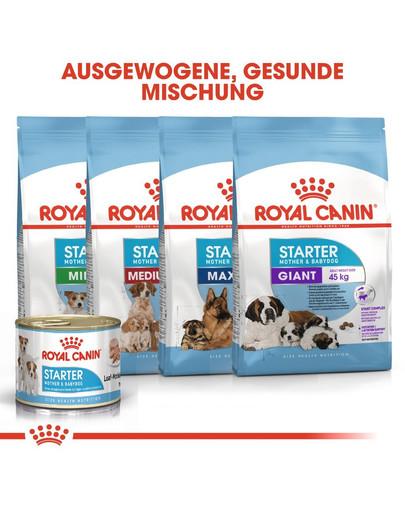 ROYAL CANIN MEDIUM Starter für tragende Hündin und Welpen 12 kg