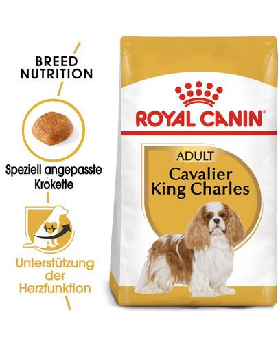 ROYAL CANIN Cavalier King Charles Adult Hundefutter trocken 1,5 kg