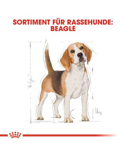 ROYAL CANIN Beagle Adult Hundefutter trocken 3 kg