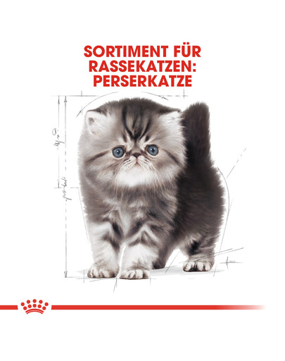 ROYAL CANIN Persian Kittenfutter trocken für Perser-Kätzchen 400 g