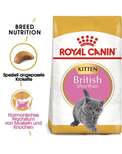 ROYAL CANIN British Shorthair Kittenfutter trocken für BKH Kätzchen 2 kg