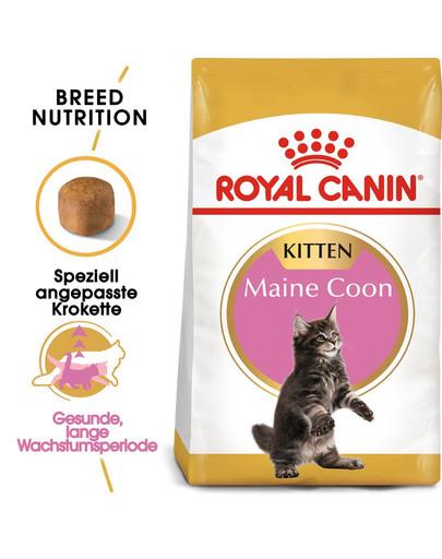 ROYAL CANIN Maine Coon Kittenfutter trocken für Kätzchen 4 kg