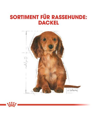 ROYAL CANIN Dachshund Puppy Welpenfutter trocken für Dackel 1,5 kg