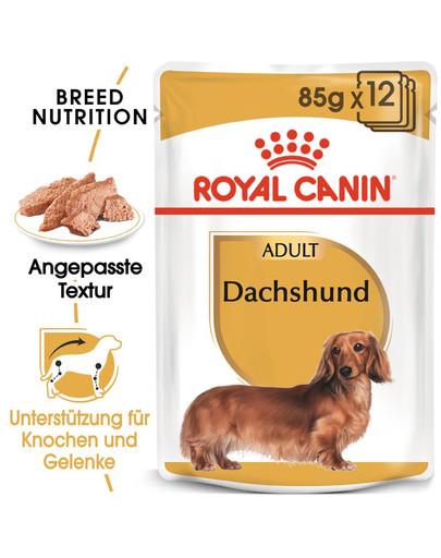 ROYAL CANIN Dachshund Adult Hundefutter nass für Dackel 12 x 85 g 42325