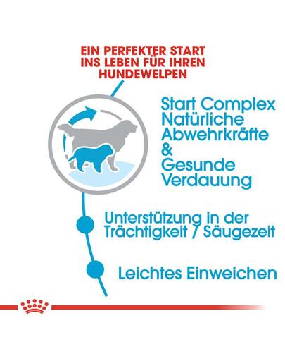 ROYAL CANIN GIANT Starter für tragende Hündin und Welpen 15 kg