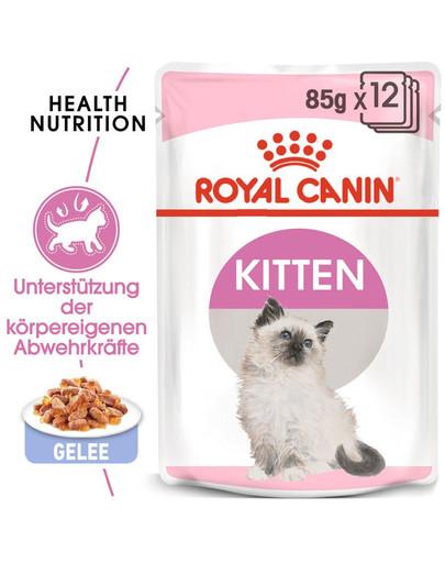 ROYAL CANIN KITTEN Nassfutter in Gelee für Kätzchen 12 x 85 g
