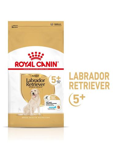 ROYAL CANIN Labrador Retriever Adult 5+ Trockenfutter für Hunde ab 5 Jahren 12kg 53470