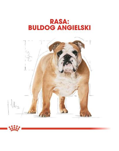ROYAL CANIN Bulldog Adult Hundefutter trocken 12 kg