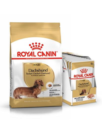 ROYAL CANIN Dachshund Adult Hundefutter trocken für Dackel 7,5 kg + nass für Dackel 12 x 85 g 54773