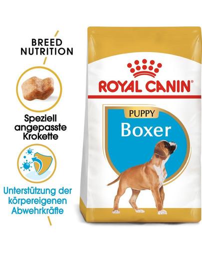 ROYAL CANIN Boxer Puppy Welpenfutter trocken 24 kg (2 x 12 kg) 54793