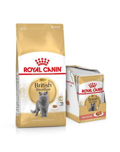 ROYAL CANIN British Shorthair Katzenfutter trocken für Britisch Kurzhaar 10 kg + Nassfutter für Britisch Kurzhaar 12x85 g 54979